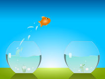 Goldfish jumping. A goldfish jumping out of a fish glass to reach another one Royalty Free Stock Photo