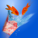 Goldfish jumping. Stock Photography