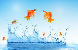 Goldfish is jumping royalty free stock photo