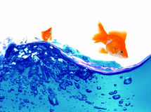 Goldfish is jumping Stock Image