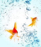 Goldfish is jumping Stock Photos