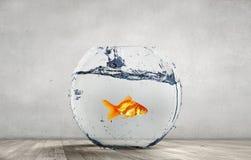 Goldfish jumping from aquarium Stock Image