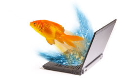 Goldfish jumping from laptop Stock Image