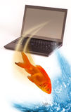 Goldfish jumping out. A goldfish jumping out of a laptop computer screen Stock Photography