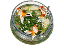 Goldfish jumping out bowl Stock Image