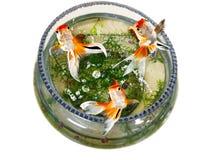 Goldfish jumping out bowl Stock Image