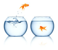 A goldfish jumping out of the fishbowl Royalty Free Stock Images