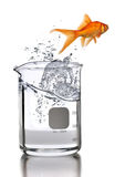 Goldfish Jumping Out of Laboratory Beaker Stock Photography
