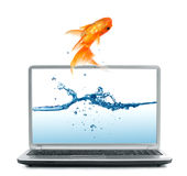 Goldfish jumping out of monitor Stock Images