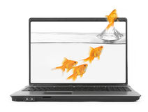 Goldfish jumping out of the notebook Royalty Free Stock Images