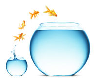 Free Goldfish Jumping Out Of The Water Royalty Free Stock Photography - 13084697