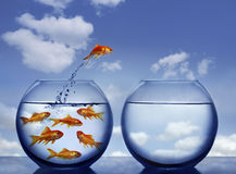 Goldfish Jumping Out Of The Water Royalty Free Stock Image