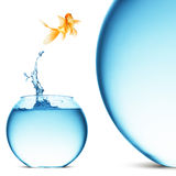 Goldfish jumping out of the water Royalty Free Stock Photography
