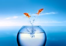 Goldfish jumping out of the water Stock Photo