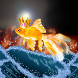 Goldfish jumping out. Of the water Royalty Free Stock Image