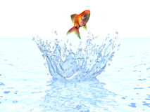 A goldfish jumping out of the water.  Stock Images