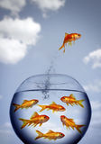 Goldfish jumping out of the water Royalty Free Stock Photos