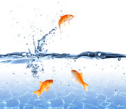 Goldfish jumping out of the water - escape concept Stock Photos