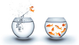 Goldfish jumping out of the water - team concept stock photography