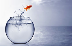 Goldfish jumping into the sea Royalty Free Stock Photography