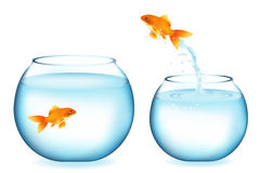 Goldfish Jumping To Other Goldfish. Vector. Golden Fish Jumping To Other Goldfish, Isolated On White Stock Photos