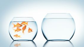 Goldfish Jumps into Another Fishbowl, Beautiful 3d Animation, 4K Ultra HD 3840x2160