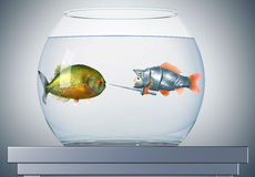 Goldfish knight and piranha Stock Images