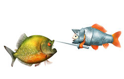 Goldfish knight and piranha, duel concept. Goldfish knight and piranha isolated on white, 3d with work-path Stock Photography