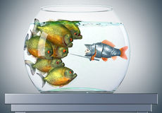 Goldfish knight and piranhas Stock Image