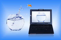 Goldfish and laptop. Jumping Goldfish and a laptop. Collage Stock Image