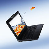 Goldfish and laptop. Goldfish jumping out of a laptop. Collage Stock Photo