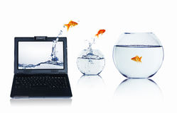 Goldfish and laptop. Goldfish jumping out of a laptop. Collage Stock Image