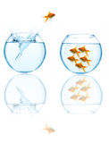 Goldfish leaping in aquarium Royalty Free Stock Photography