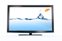 Goldfish leaping out of a stylish lcd tv. On white backround Stock Images