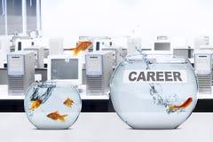 Goldfish leaps to better aquarium Stock Image