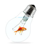 Goldfish in light bulb stock photography