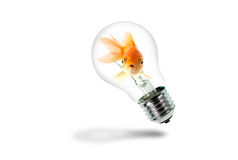 Goldfish in Light Bulb Royalty Free Stock Photo