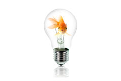Goldfish in Light Bulb Royalty Free Stock Image