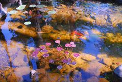 Goldfish Lily Pond Royalty Free Stock Photography