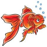 Goldfish Lionhead Stock Image