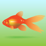 Goldfish is located on a green blue background. Ve Royalty Free Stock Image