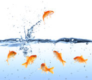 Goldfish looking for way out  - escape concept Stock Photos