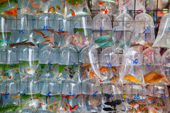 Goldfish market Stock Photos