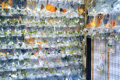 Goldfish Market in Hong Kong Stock Photography