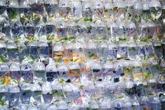 Goldfish Market in Hong Kong Stock Photos