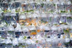 Goldfish Market in Hong Kong Royalty Free Stock Image