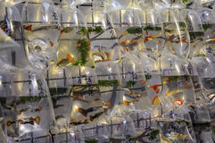 Goldfish market in Hong Kong Stock Image
