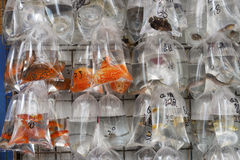Goldfish Market, Hong Kong Royalty Free Stock Image