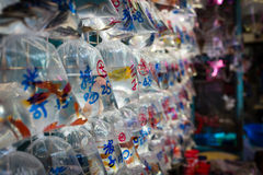 The Goldfish Market In Hong Kong Stock Images