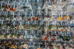 Goldfish market Mong Kok Kowloon Hong Kong Royalty Free Stock Photo